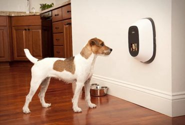 Best Pet Camera And Treat Dispenser